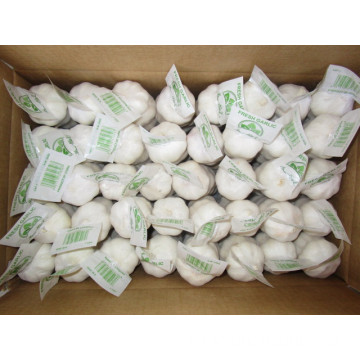 Pure White Garlic Packed In 10kg carton