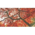 Glass Mosaic Art Red Maple Forest Beautiful Mural
