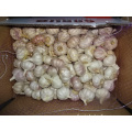 2019 New Crop Fresh Garlic