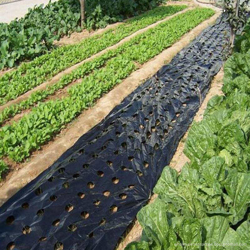 5~50m 5Holes Black Plastic Mulch Film Agricultural Vegetable Plants Grow Film Greenhouse Keep Warm Anti Grass Perforated PE