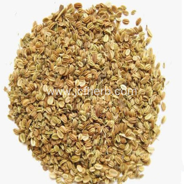 Cnidium Extract Powder Cnidium Monnieri Powder