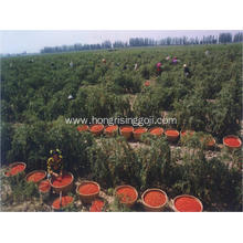 organic dried goji berries bulk wholesale