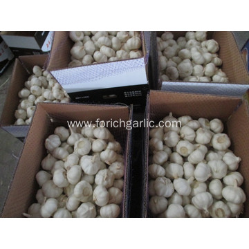 Fresh Pure White Garlic Size 5.5cm