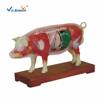 Animal Medical Model Pig Acupuncture Model
