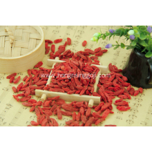 Dried Goji Berry Export with Cheap Price