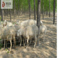 Animal Protection Fence Cattle Deer Farm Fence