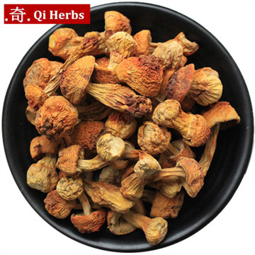 Dried Agaricus Blazei/Tricholoma Matsutake