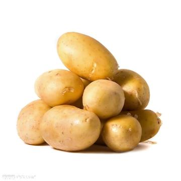 FRESH POTATO NEW CROP WITH GOOD QUALITY