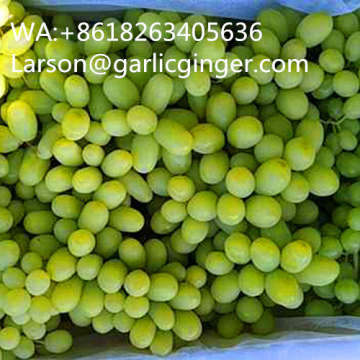 Seedless Long Shape White Grape
