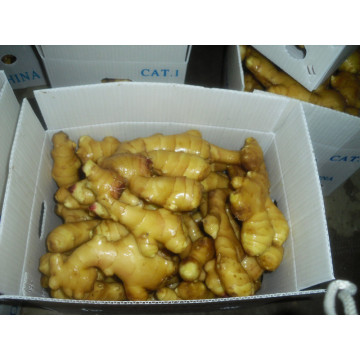 export to middle east market Fresh ginger