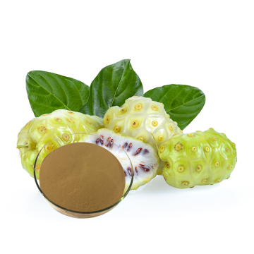 High quality noni fruit powder with more benefits