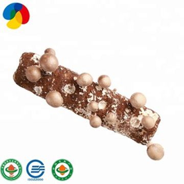 Qihe fruit smell shiitake mushroom spawn for sale