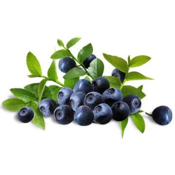 European Bilberry Extract Natural Anthocyanin>25%