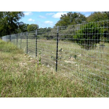 T Fence Post Galvanized steel T post