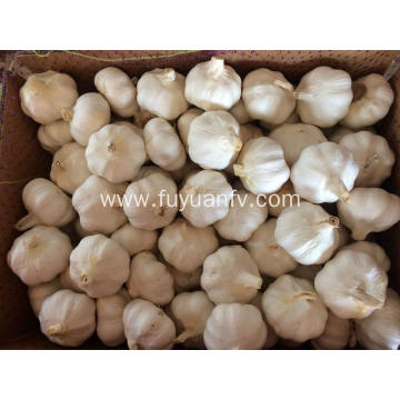 New garlic be exported to South Africa
