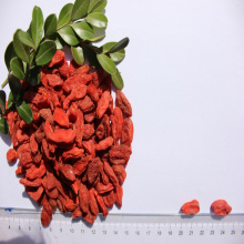 High nutrition Certified Healthy organic Goji Berry