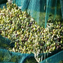 100% hdpe olive harvest netting