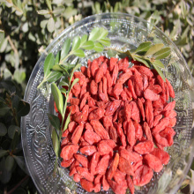 Natural Low Price Free Sample Dried Goji Berry