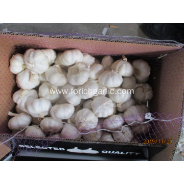 Best Quality Fresh Crop 2019 Pure White Garlic