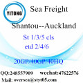 Shantou Port Sea Freight Shipping To Auckland
