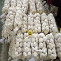 Best Prepacked White Garlic