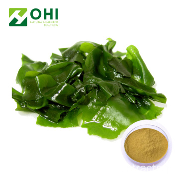 Kelp Extract Fucoidan Powder