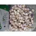 2019 Hot Sale Normaler Knoblauch