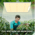 Full Spectrum 100w Panel Grow Lamp for Indoor Plants