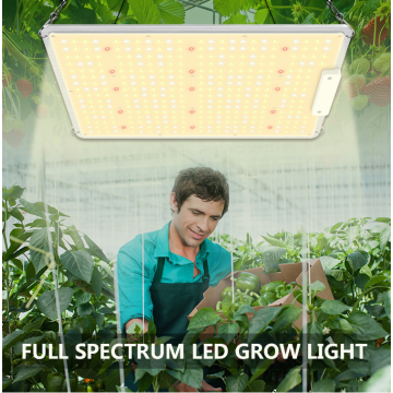100W led grow panel light indoor plant