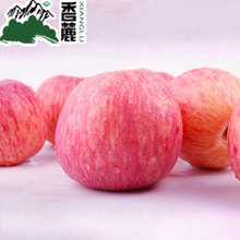 Real organic red Fuji apple