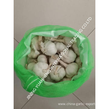 High quality fresh garlic white garlic