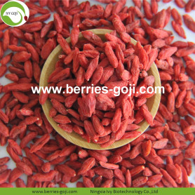 Factory Hot Sale Dried Himalayan Goji Berry