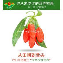 Goji Berry with high Goji Berries Nutrition