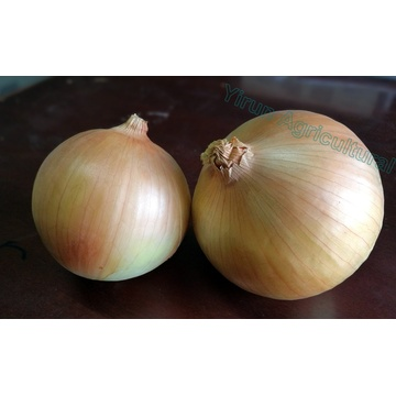 Good Taste Natural Quality Fresh Yellow Onions