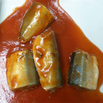 Canned Mackerel Fish In Tomato Sauce Flavors OEM