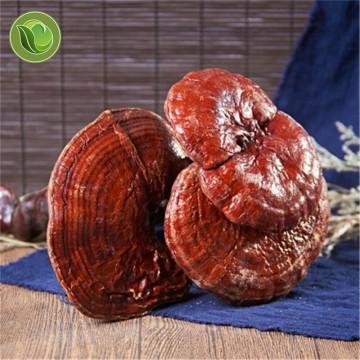 Dried Wild Lingzhi Purple Ganoderma Lucidum Herbal Organic Reishi Mushroom