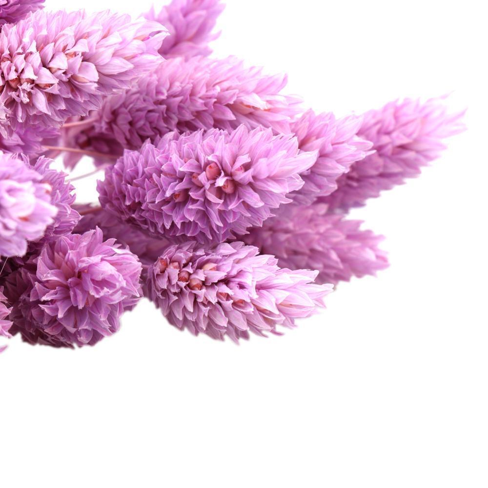 20Pcs Dried Natural Flower Bouquets Colorful Lagurus Ovatus Bouquets Uraria Picta Rabbit Tail Grass Bouquets Bunches