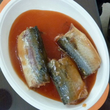 Mackerel Fish Canned In Tomato Sauce OEM Brand