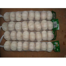 Tamaño grande Normal Garlic15 16pcs bag10kg cartón