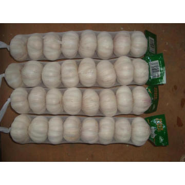 Grand format Normal Garlic15 16pcs bag10kg carton