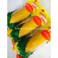 New Sweet Corn with High Quality