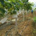 100Pcs/Lot Garden Vegetable Grapes Apples Fruit Protection Bag Pouch Agricultural Pest Control Anti-Bird Mesh Bags