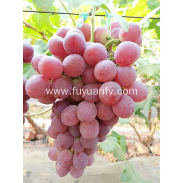 red color sweet grapes