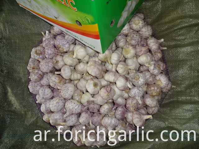 Different Sizes Normal Garlic 2019