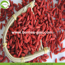 Factory Supply Fruits Premium Red Goji Berry