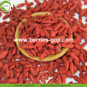High Qualty Sale Nutrition Food Common Goji Berries