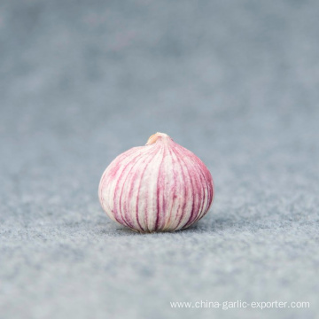 High quality fresh single clove garlic