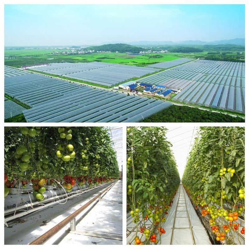 60g Quick-acting Compound Fertilizer Nitrogen, Phosphorus and Potassium Plant Foliage Organic Fertilizer Flower Pot Fertilizer
