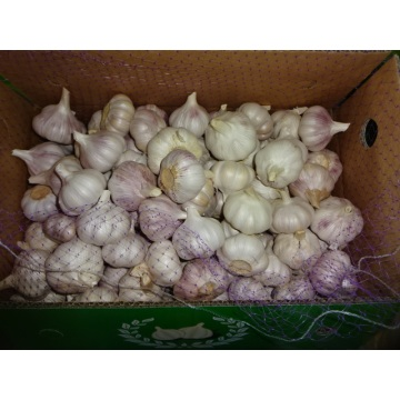 Size 5.0cm 2020 Normal White Garlic
