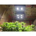 1200W LED Grow Light for VEG BLOOM